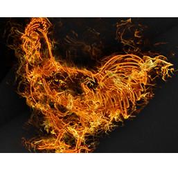 Бонус «Огонь» от FreshForex