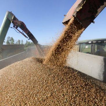 Падение рубля, динамика рынков не повлияла на рост экспортных цен пшеницы