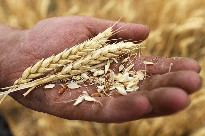 Экспортные цены на пшеницу